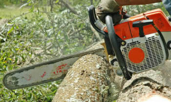 Tree Removal in Arlington TX Tree Removal Quotes in Arlington TX Tree Removal Estimates in Arlington TX Tree Removal Services in Arlington TX Tree Removal Professionals in Arlington TX Tree Services in Arlington TX