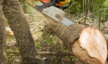 Tree Service in Arlington TX Tree Service Estimates in Arlington TX Tree Service Quotes in Arlington TX Tree Service Professionals in Arlington TX