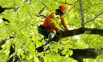 Tree Trimming in Arlington TX Tree Trimming Services in Arlington TX Tree Trimming Professionals in Arlington TX Tree Services in Arlington TX Tree Trimming Estimates in Arlington TX Tree Trimming Quotes in Arlington TX