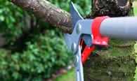 Tree Pruning Services in Arlington TX