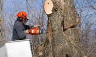 Tree Removal in Arlington TX